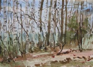 Birkenwald  25 x 35 cm