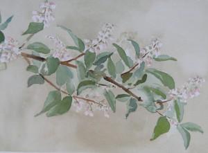 Blütenzweig  26 x 36 cm