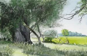 Havelinsel bei Strodehne  Größe 38 x 56 cm